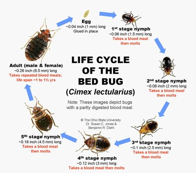 BedBug Information-How to find, contain, and exterminate ...